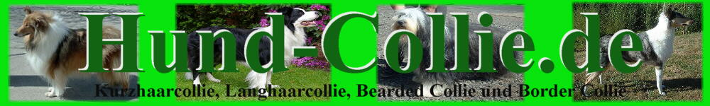Kurzhaarcollie Langhaarcollie Bearded Collie Border Collie Infos Aussehen Charakter